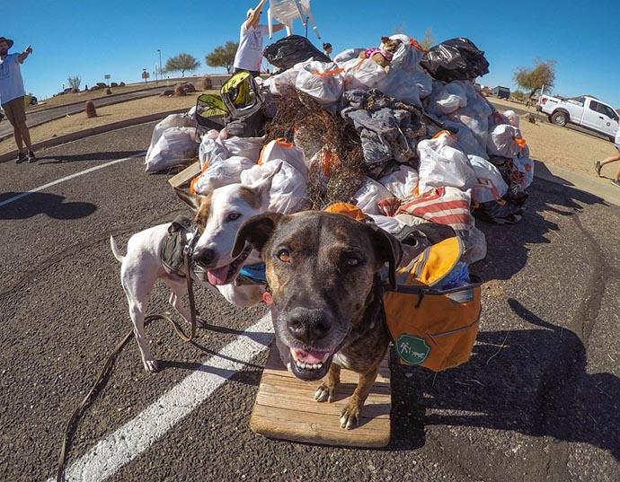 Il cane che raccoglie la spazzatura