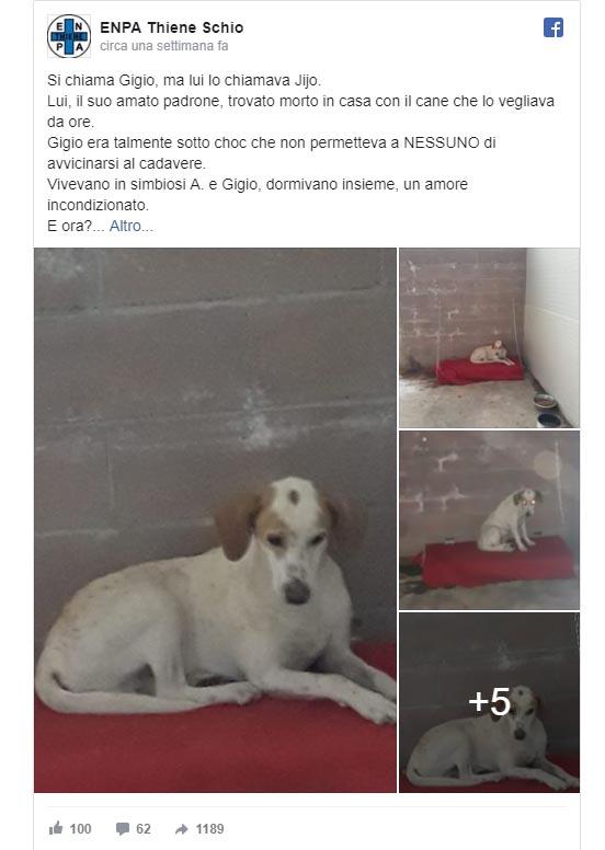 Gigio, il cane che ha vegliato per 48 ore sul corpo del padrone defunto
