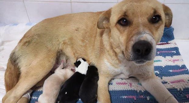 Cane abbandonato in un sacco partorisce subito dopo il salvataggio