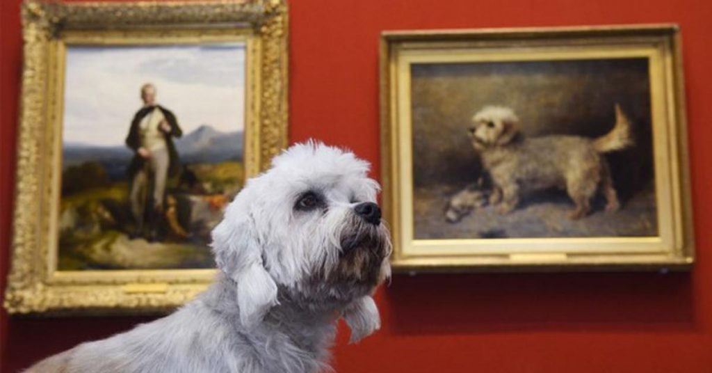 La storia di Dandy, il cane che vale due milioni di sterline