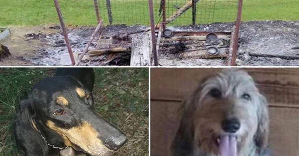 La triste storia dei due cani Bobo e Lea