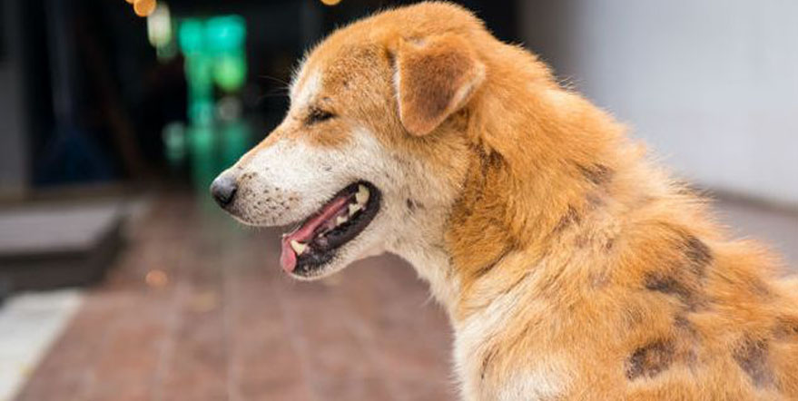 Dreadlock, il cane che da randagio è diventato vincitore di un concorso