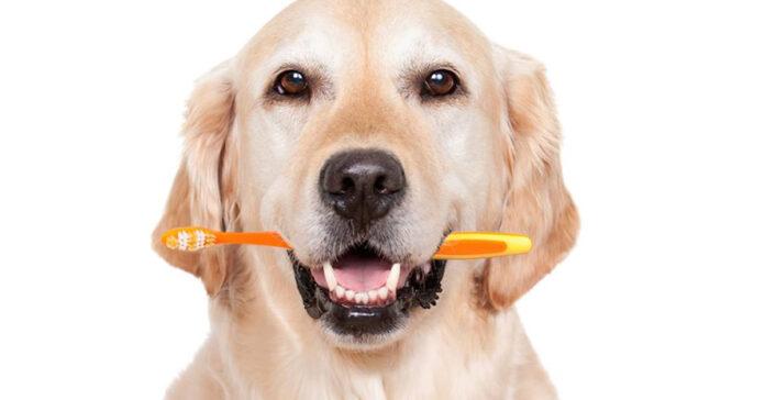 Maggio è il mese dell'igiene orale del cane tutto ciò che c'è da sapere