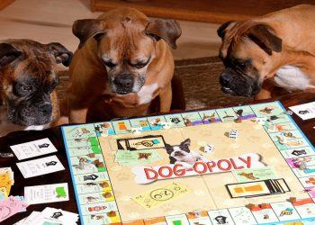 Monopoli sui cani è arrivato Dogopoly ed ha già conquistato tutti