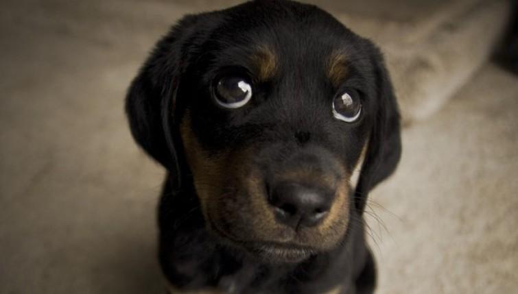 Occhioni dolci di un cane