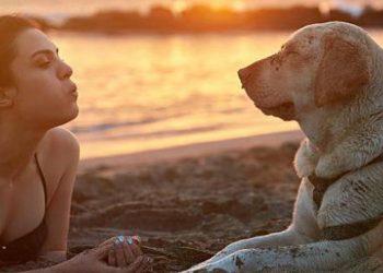 Perchè i cani odiano sentirsi soffiare sul muso Ecco svelato il mistero