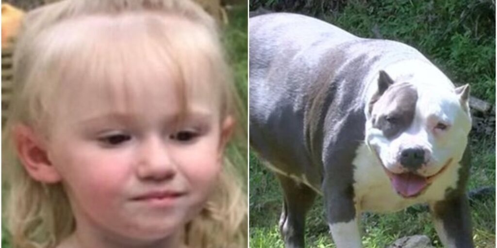 Pitbull salva una bambina