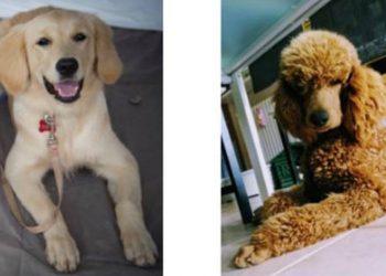 Quando i cani fanno bene al cuore la Pet Therapy di Aida e Chupito