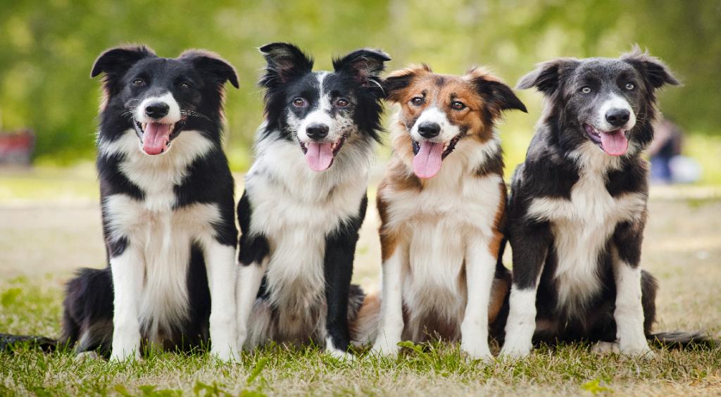 Cani all'asilo: i nostri amici a quattro zampe tra i banchi di scuola