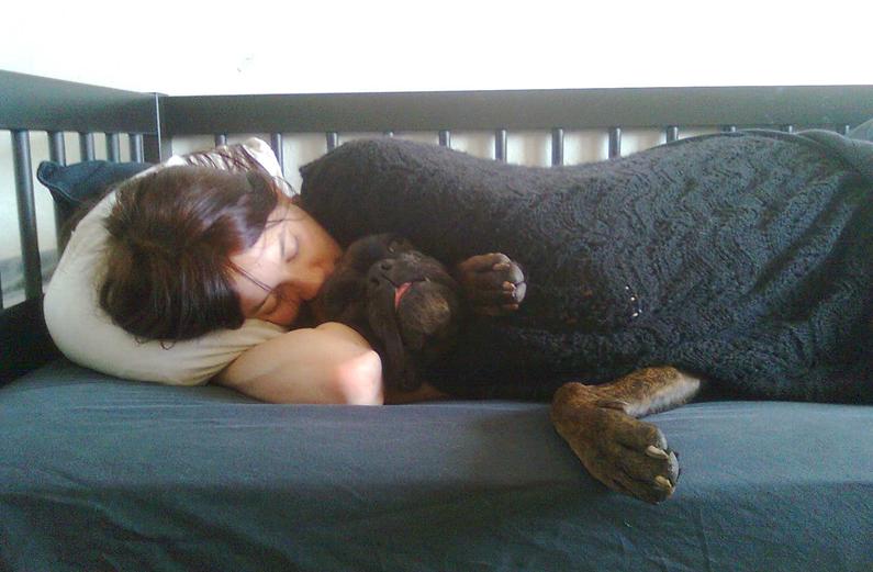 Cani contro l'insonnia: secondo la scienza ci aiutano a dormire meglio