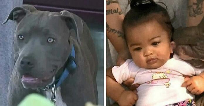 Sasha, il cane che ha salvato una bambina da una casa in fiamme