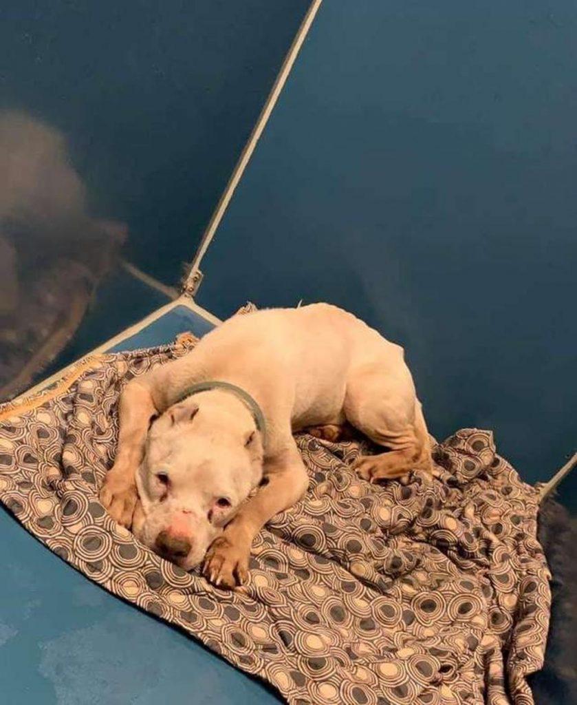 Sloan, il cane trovato in fin di vita da un postino