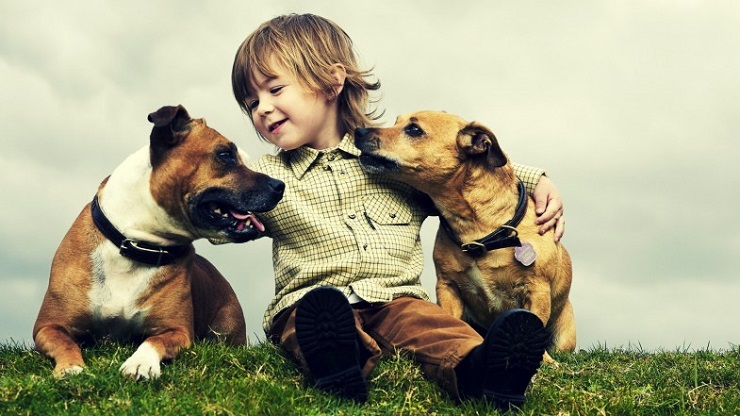 Un bambino insieme a due cani
