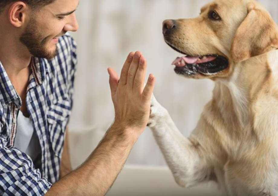 Un cane batte il cinque con il proprio padrone