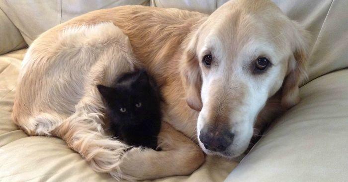 Il cane è più intelligente del gatto? Secondo la scienza ha molti più neuroni