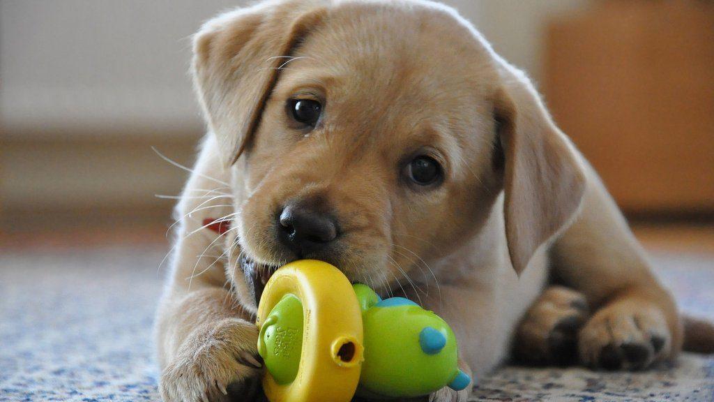 Cani e tono di voce: perchè lo cambiamo quando parliamo con loro?