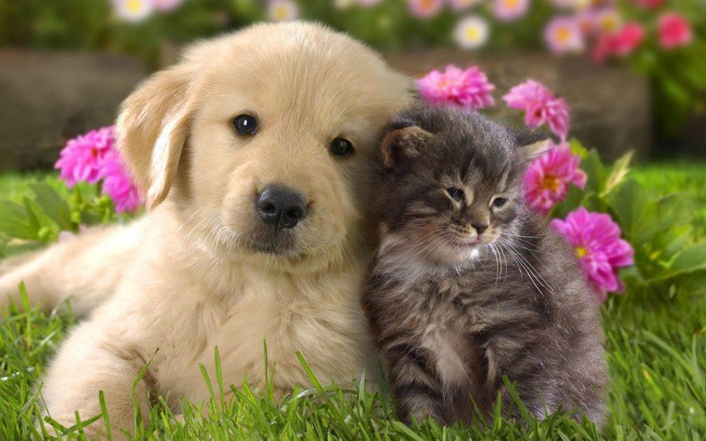 Divieto di mangiare cani e gatti: finalmente arriva la proposta di legge