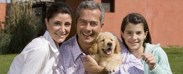 Cani e divorzio: arriva l'affido condiviso per le coppie che si separano