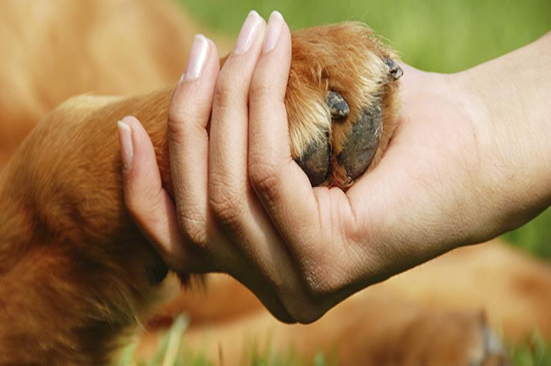 Una mano che tiene la zampa di un cane