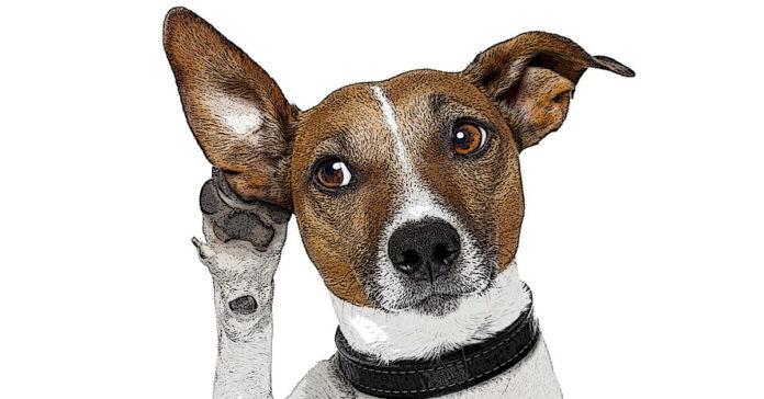 Vero o no i cani avvertono il terremoto prima che avvenga