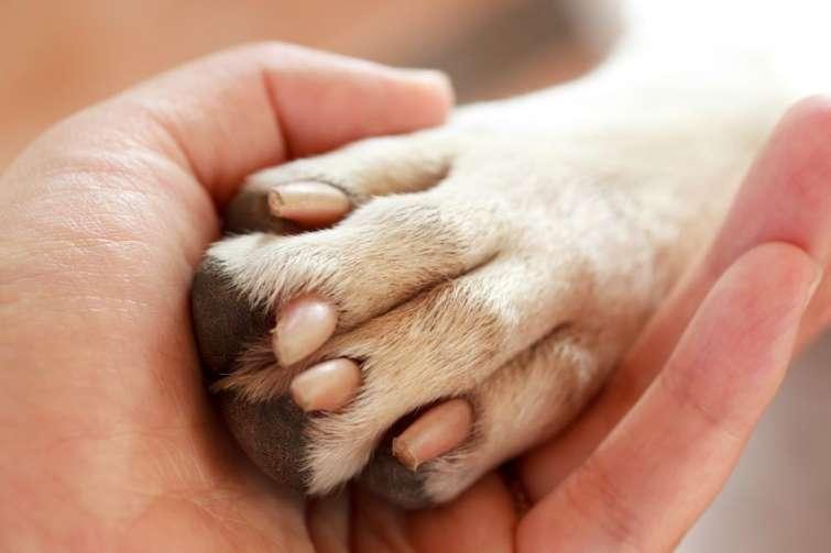 Zampa di un cane nella mano di un uomo