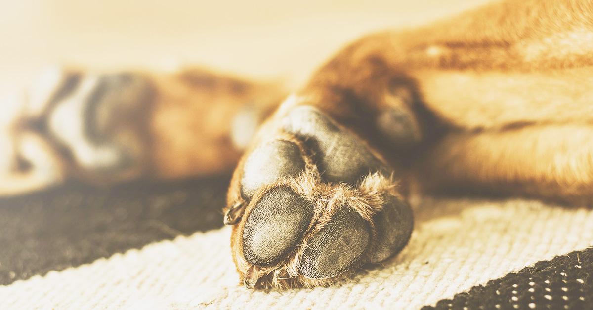 La stenosi cervicale nel cane