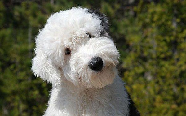 cane con testa piegata