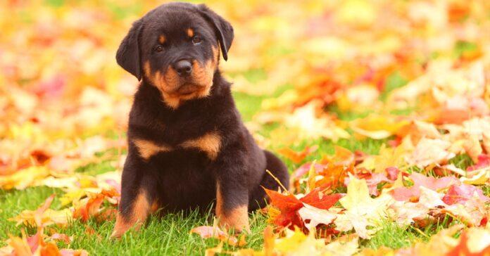 cucciolo di cane su prato in autunno