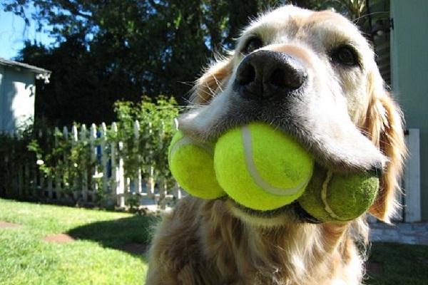 cane con tre palline