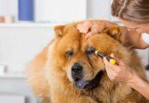 un cane fa la puntura