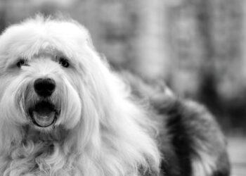 cane in bianco e nero