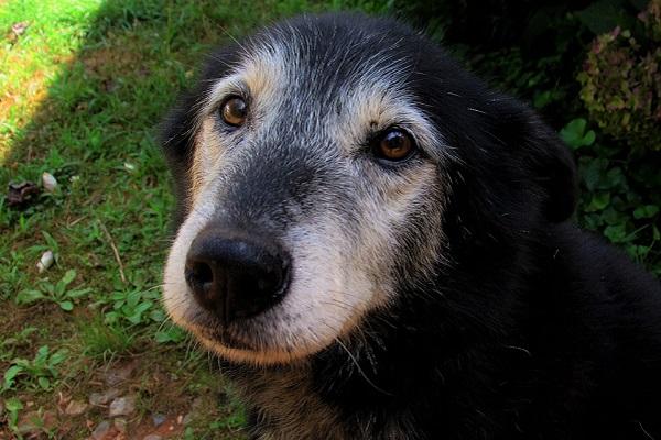 Artrite nel cane: cause, sintomi e cure