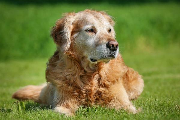 Artrosi del cane: tutto quello che c'è da sapere