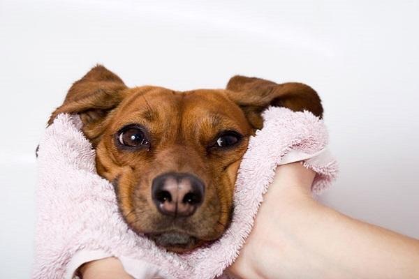 pelo del cane da asciugare