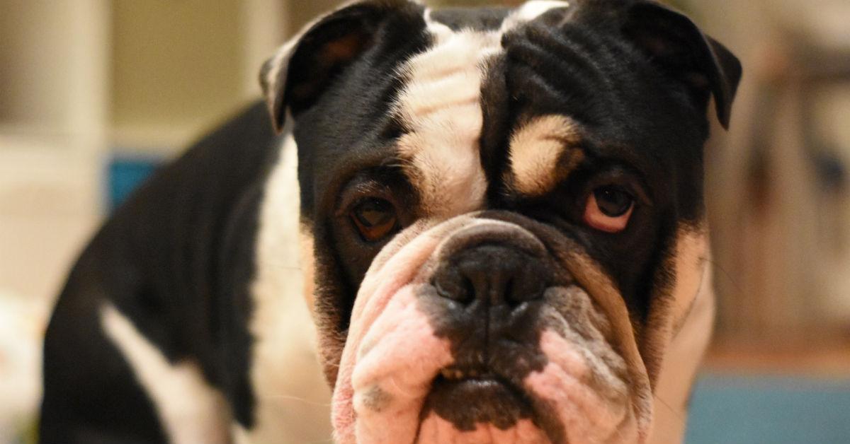 prostata infiammata cane sintomi