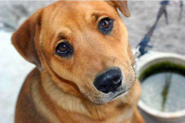 Magnesio alto nel sangue del cane: cosa significa e cosa fare