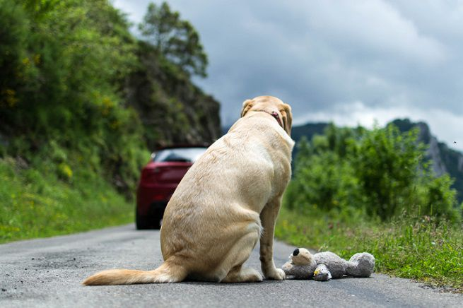 cane-abbandono