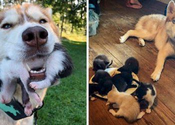 cane-accompagna-proprietario-bosco-trova-gatti