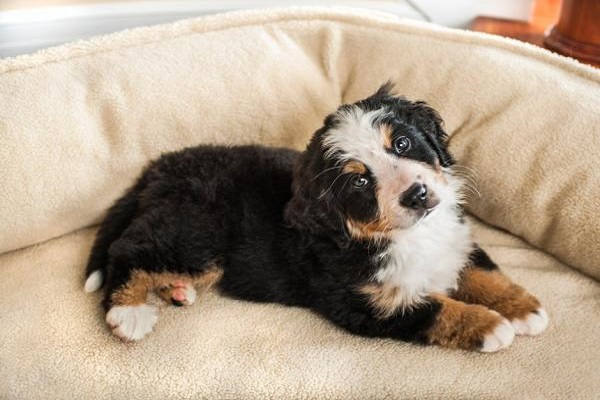 cucciolo di cane nella cuccia