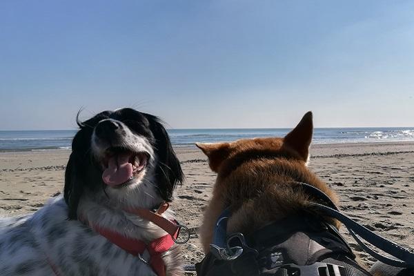 due cani in spiaggia