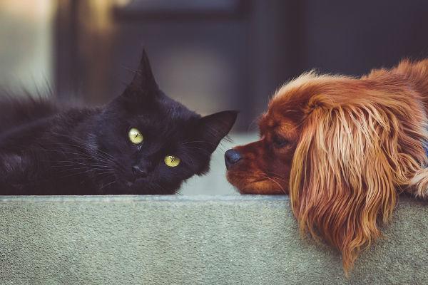 Cane allergico al gatto: è possibile?