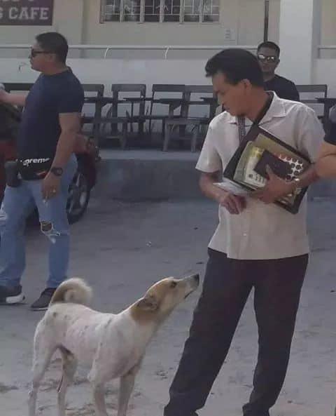cane-amico