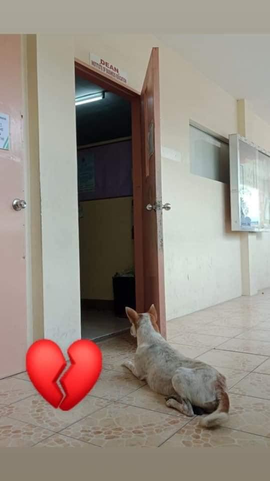 cane-aspetta-amico