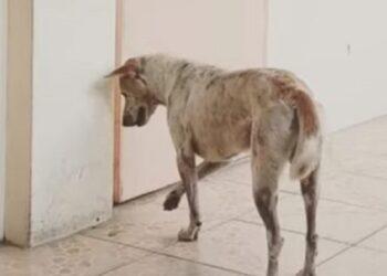 cane-aspetta-invano-ritorno-amico