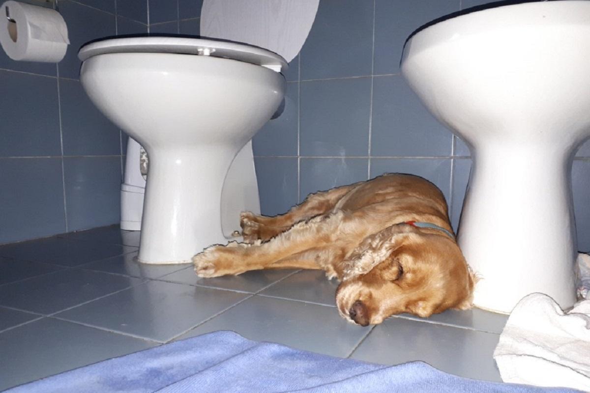 cane sta male in bagno