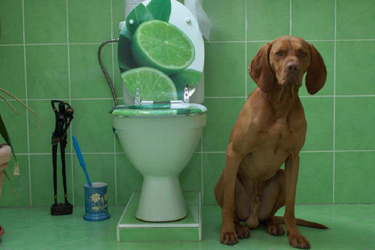 cane accanto al wc