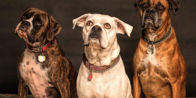cani in attesa