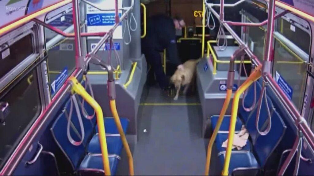 cane-cooper-furto