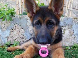 cane-crede-di-essere-un-bambino