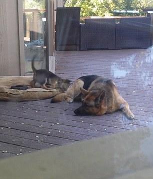 Cane e cucciolo sono protagonisti di una scena bellissima